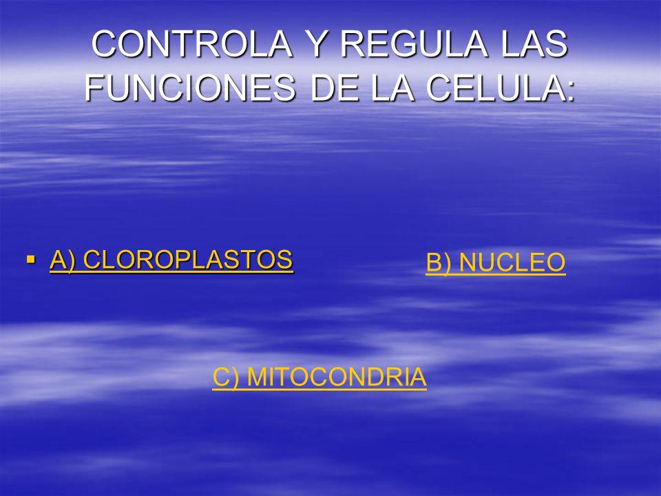 CONTROLA Y REGULA LAS FUNCIONES DE LA CELULA:  A) CLOROPLASTOS A) CLOROPLASTOS A) CLOROPLASTOS B) NUCLEO C) MITOCONDRIA