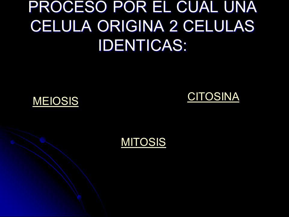 PROCESO POR EL CUAL UNA CELULA ORIGINA 2 CELULAS IDENTICAS: MEIOSIS CITOSINA MITOSIS