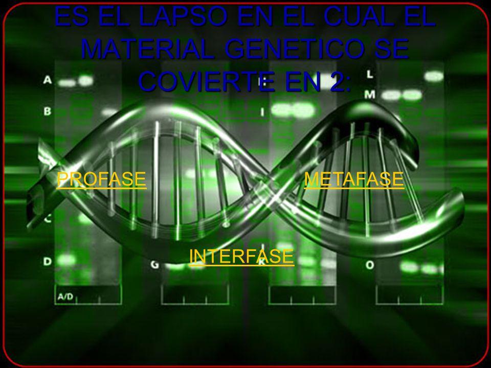 ES EL LAPSO EN EL CUAL EL MATERIAL GENETICO SE COVIERTE EN 2: PROFASE METAFASE INTERFASE