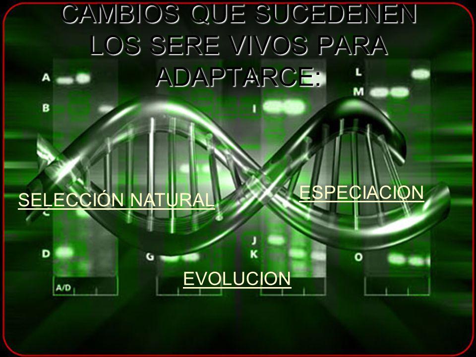 CAMBIOS QUE SUCEDENEN LOS SERE VIVOS PARA ADAPTARCE: SELECCIÓN NATURAL ESPECIACION EVOLUCION