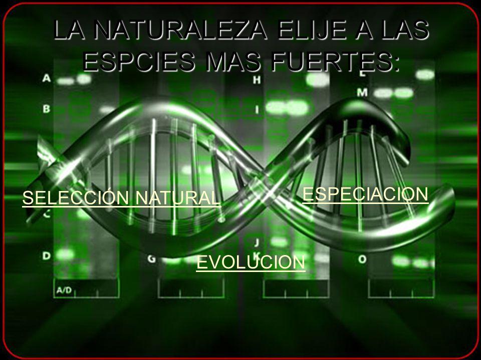 LA NATURALEZA ELIJE A LAS ESPCIES MAS FUERTES: SELECCIÓN NATURAL ESPECIACION EVOLUCION