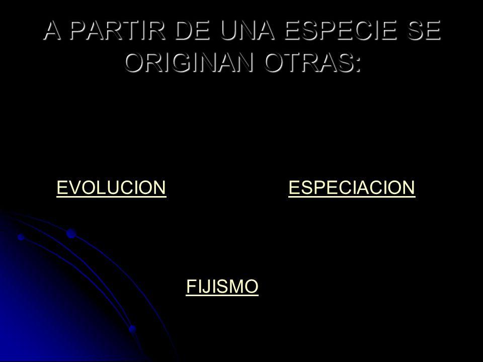 A PARTIR DE UNA ESPECIE SE ORIGINAN OTRAS: EVOLUCIONESPECIACION FIJISMO