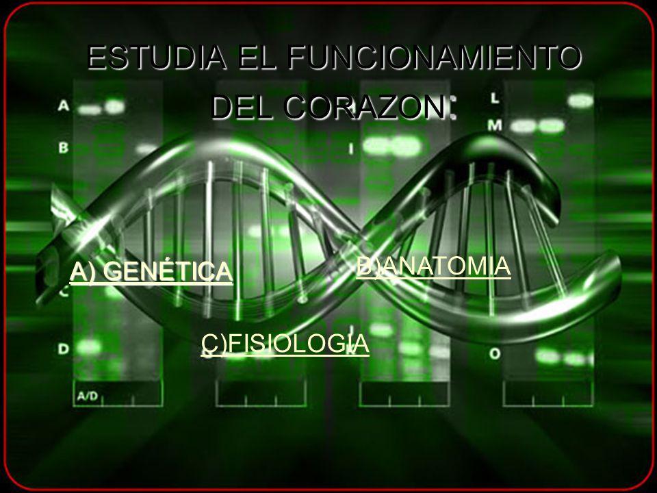 ESTUDIA EL FUNCIONAMIENTO DEL CORAZON : A) GENÉTICA A) GENÉTICA B)ANATOMIA C)FISIOLOGIA