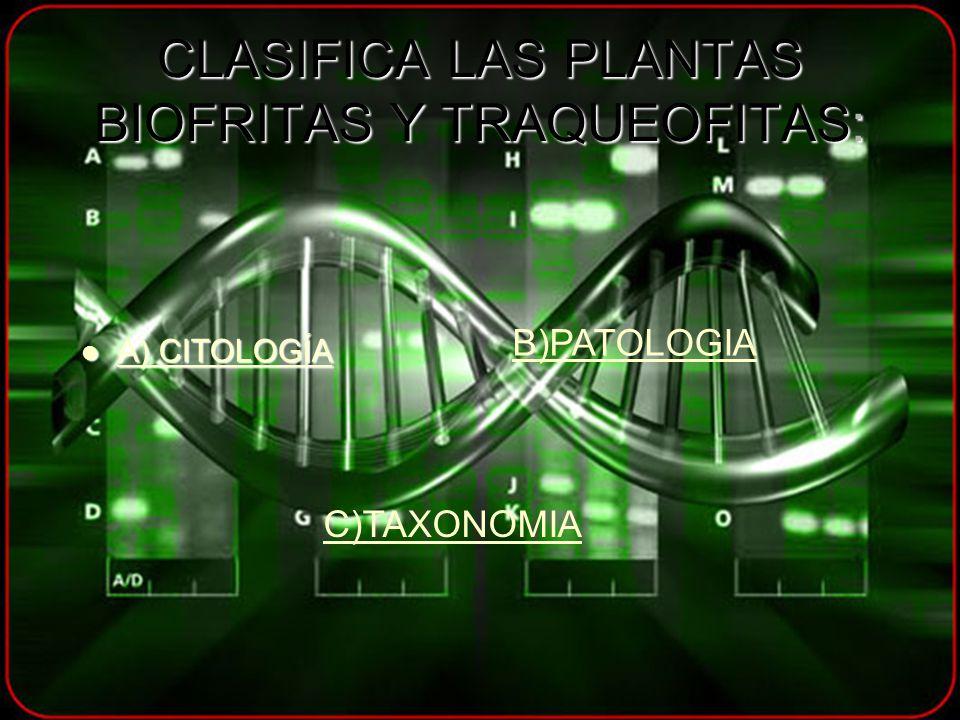 CLASIFICA LAS PLANTAS BIOFRITAS Y TRAQUEOFITAS: A) CITOLOGÍA A) CITOLOGÍA A) CITOLOGÍA A) CITOLOGÍA B)PATOLOGIA C)TAXONOMIA