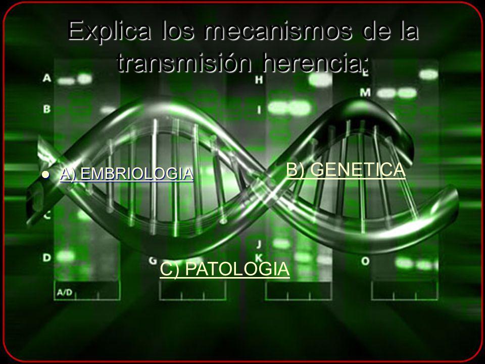 Explica los mecanismos de la transmisión herencia: A) EMBRIOLOGIA A) EMBRIOLOGIA A) EMBRIOLOGIA A) EMBRIOLOGIA B) GENETICA C) PATOLOGIA