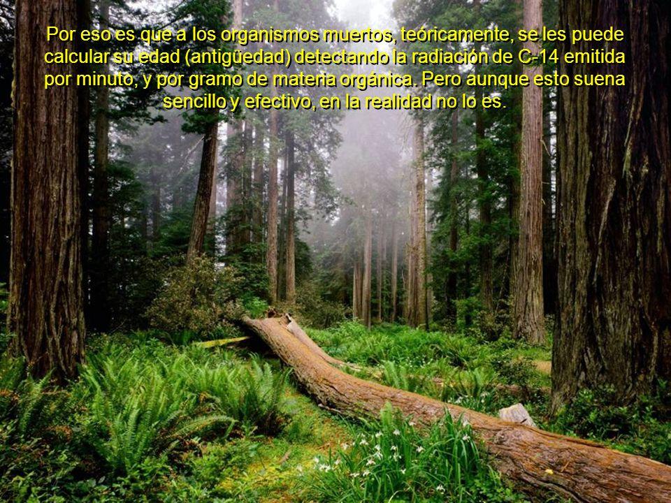 Como a los 12 minutos de haberse producido en la atmósfera, el Carbono 14 se transforma en CO2 (bióxido de carbono) radiactivo (con radio-Carbono 14), y así es integrado a las plantas durante la fotosíntesis, y a través de ellas, a los herbívoros, y por ellos, a los carnívoros y el resto de los seres vivos, donde al morir, el C14 decae sin ser reemplazado.