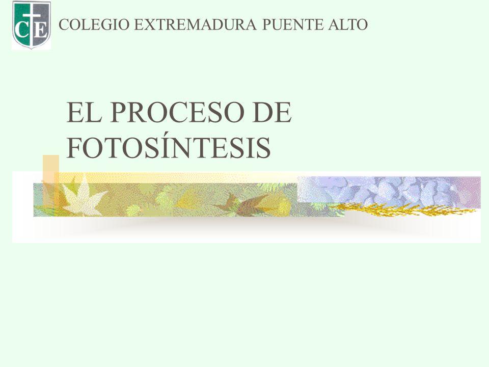 EL PROCESO DE FOTOSÍNTESIS COLEGIO EXTREMADURA PUENTE ALTO