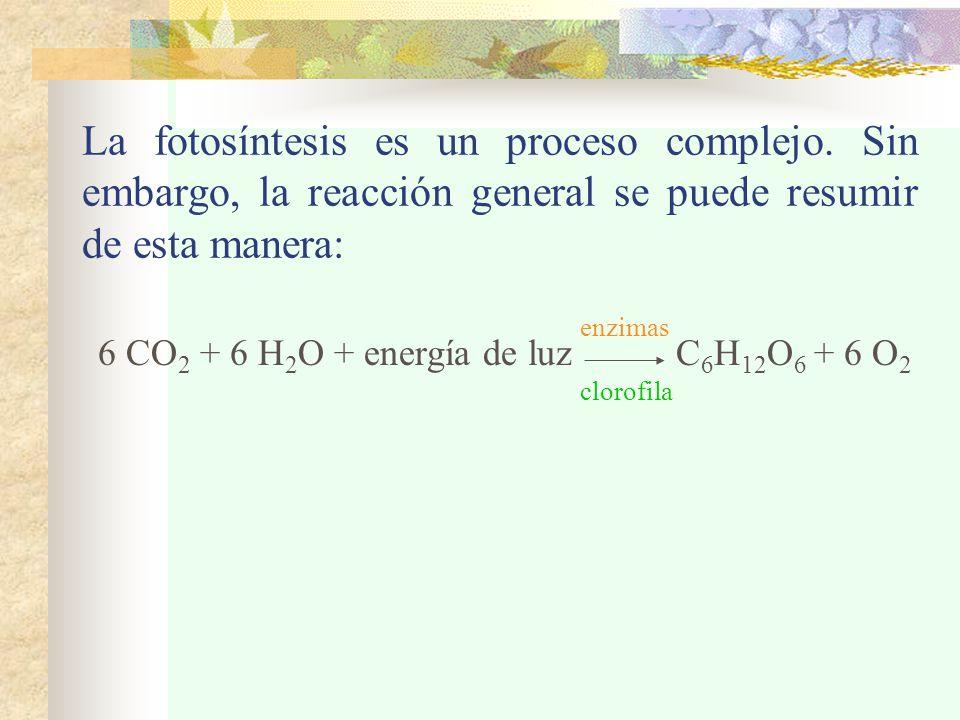 La fotosíntesis es un proceso complejo.