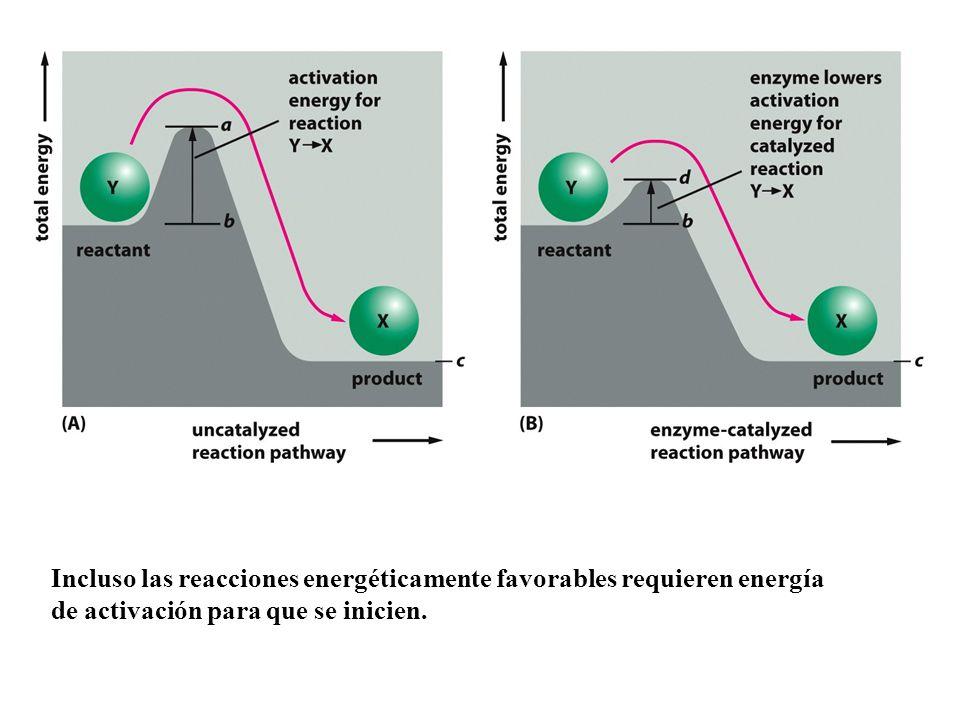 Incluso las reacciones energéticamente favorables requieren energía de activación para que se inicien.
