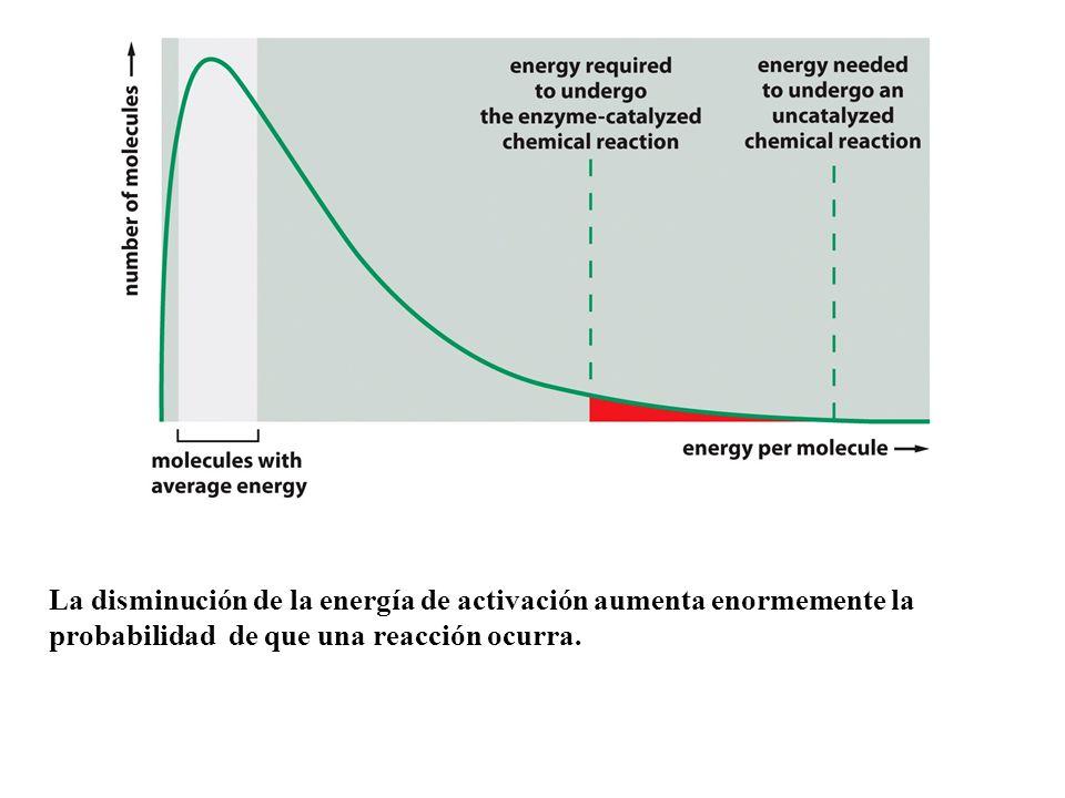 La disminución de la energía de activación aumenta enormemente la probabilidad de que una reacción ocurra.
