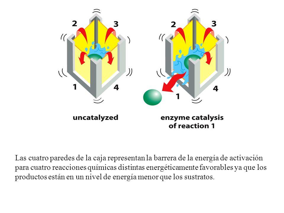 Las cuatro paredes de la caja representan la barrera de la energía de activación para cuatro reacciones químicas distintas energéticamente favorables ya que los productos están en un nivel de energía menor que los sustratos.
