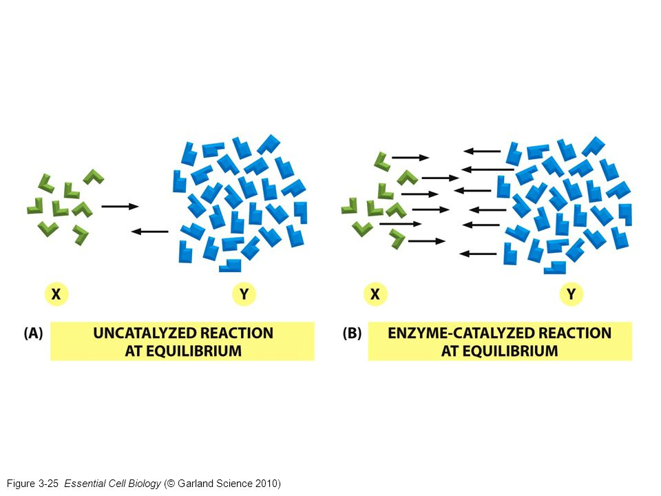 Figure 3-25 Essential Cell Biology (© Garland Science 2010)