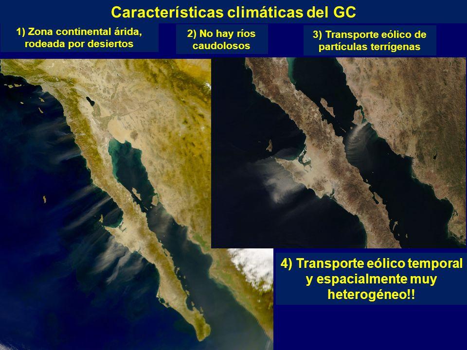 3) Transporte eólico de partículas terrígenas Características climáticas del GC 1) Zona continental árida, rodeada por desiertos 2) No hay ríos caudolosos 4) Transporte eólico temporal y espacialmente muy heterogéneo!!