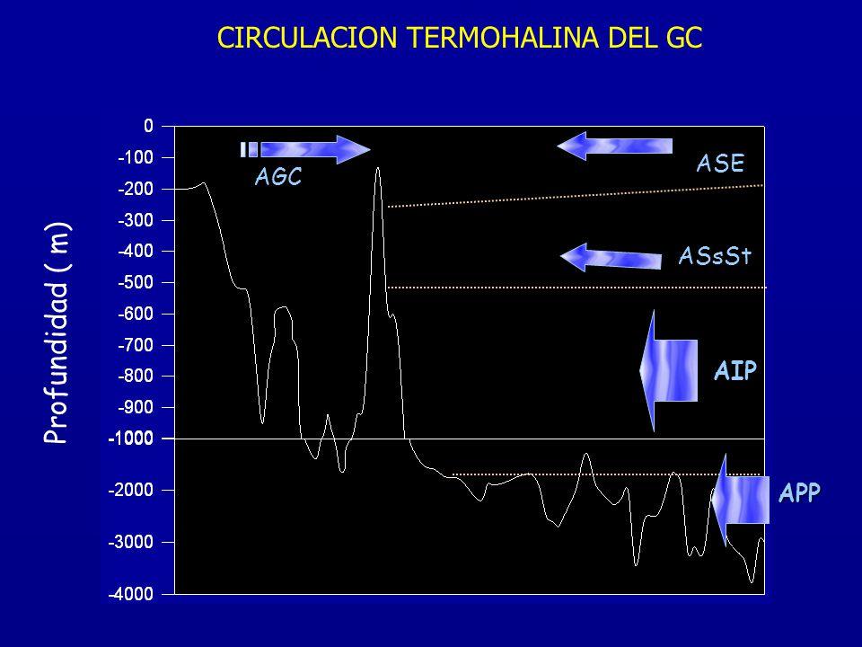 CIRCULACION TERMOHALINA DEL GC Profundidad ( m) AIP APP ASsSt AGC ASE
