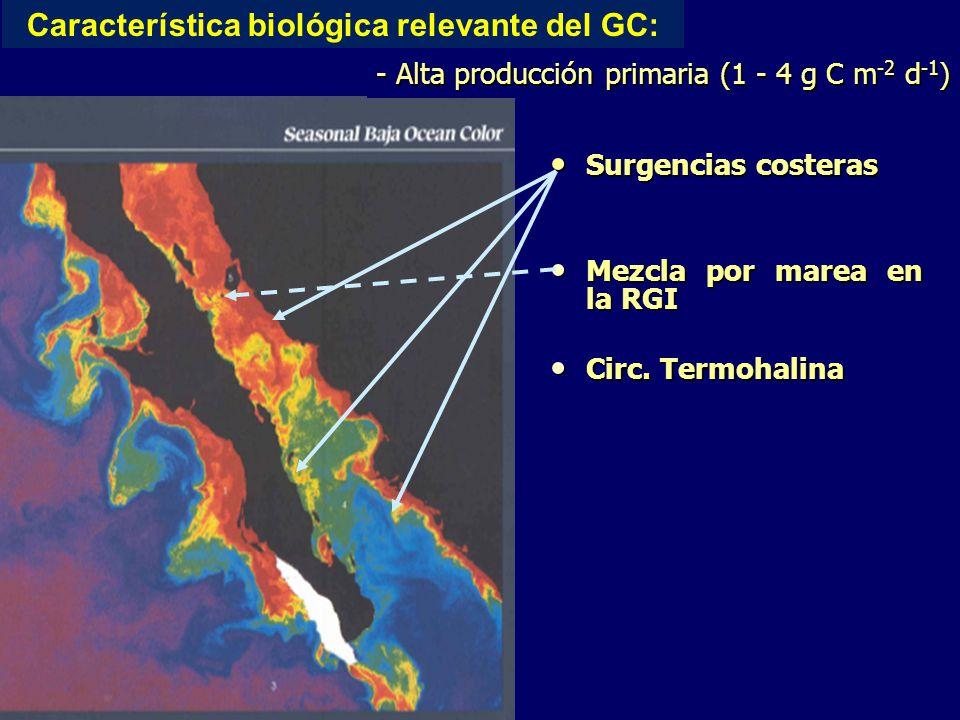 Surgencias costeras Surgencias costeras Mezcla por marea en la RGI Mezcla por marea en la RGI Circ.