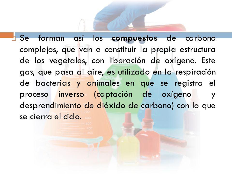  Se forman así los compuestos de carbono complejos, que van a constituir la propia estructura de los vegetales, con liberación de oxígeno.