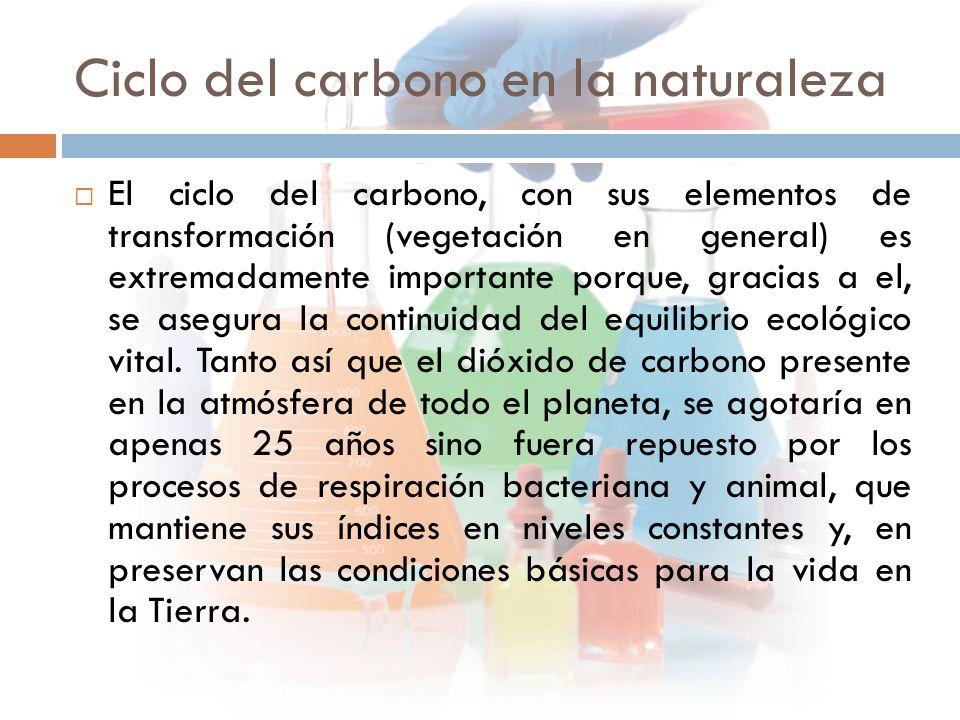 Ciclo del carbono en la naturaleza  El ciclo del carbono, con sus elementos de transformación (vegetación en general) es extremadamente importante porque, gracias a el, se asegura la continuidad del equilibrio ecológico vital.