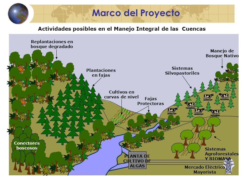 Marco del Proyecto Actividades posibles en el Manejo Integral de las Cuencas PLANTA DE CULTIVO DE ALGAS Fajas Protectoras Sistemas Silvopastoriles Cultivos en curvas de nivel Plantaciones en fajas Replantaciones en bosque degradado Conectores boscosos Sistemas Agroforestales Y BIOMASA Mercado Eléctrico Mayorista Manejo de Bosque Nativo