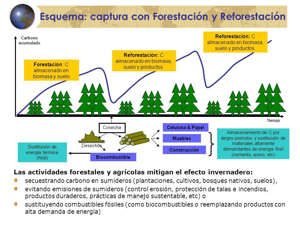 Esquema: captura con Forestación y Reforestación Tiempo Forestación: C almacenado en biomasa y suelo Reforestación: C almacenado en biomasa, suelo y productos.