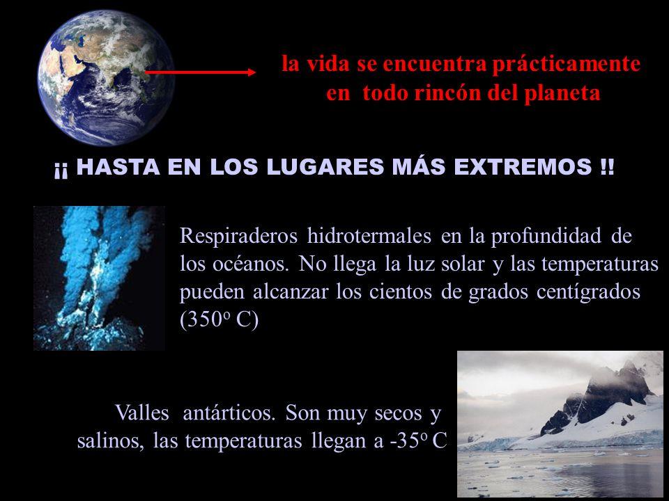 la vida se encuentra prácticamente en todo rincón del planeta ¡¡ HASTA EN LOS LUGARES MÁS EXTREMOS !.