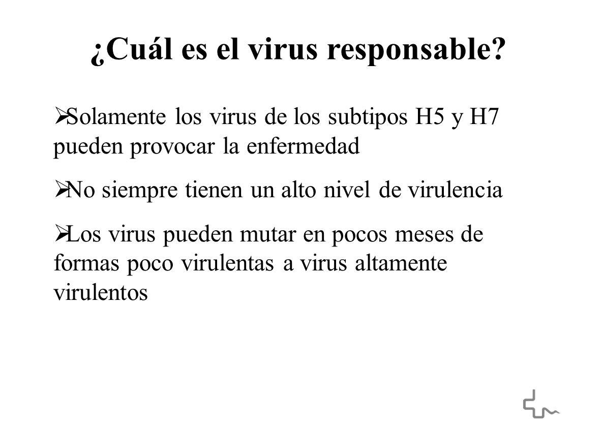 ¿Cuál es el virus responsable.