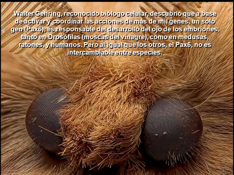 En un intento por explicar la evolución de diferentes ojos en diferentes criaturas, se propuso el concepto de evolución convergente. Pero por ley de probabilidades, la posibilidad de que por pura casualidad, aún en billones de años, se organice el ADN necesario para formar un solo tipo de ojo (y por lo tanto los otros 30 o más tipos conocidos), es cero.