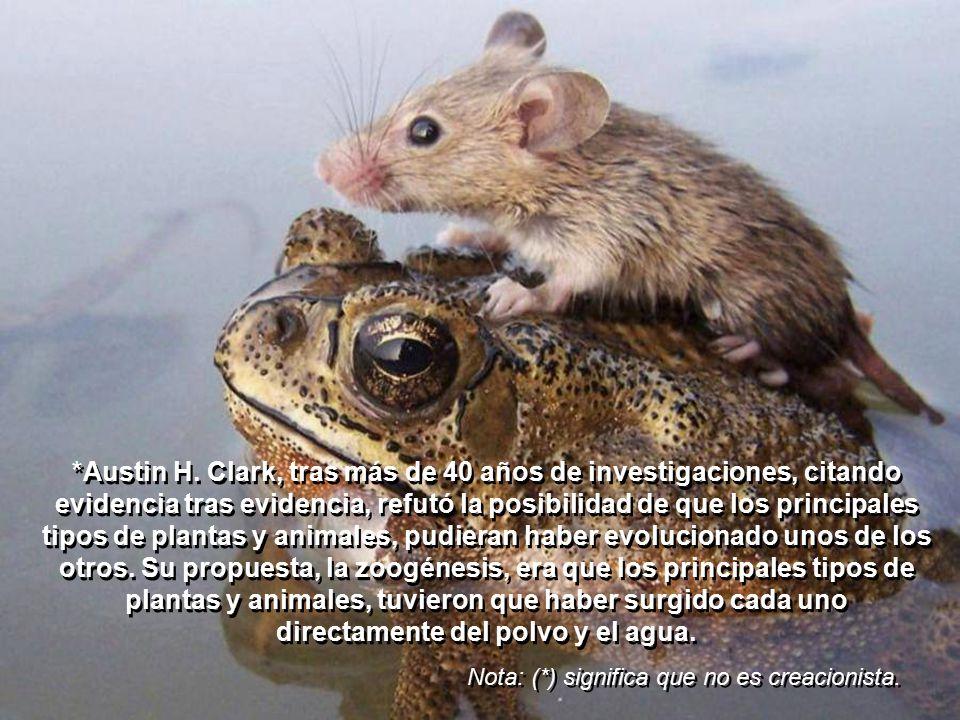 Los ojos de los mamíferos son similares a los de los otros vertebrados.