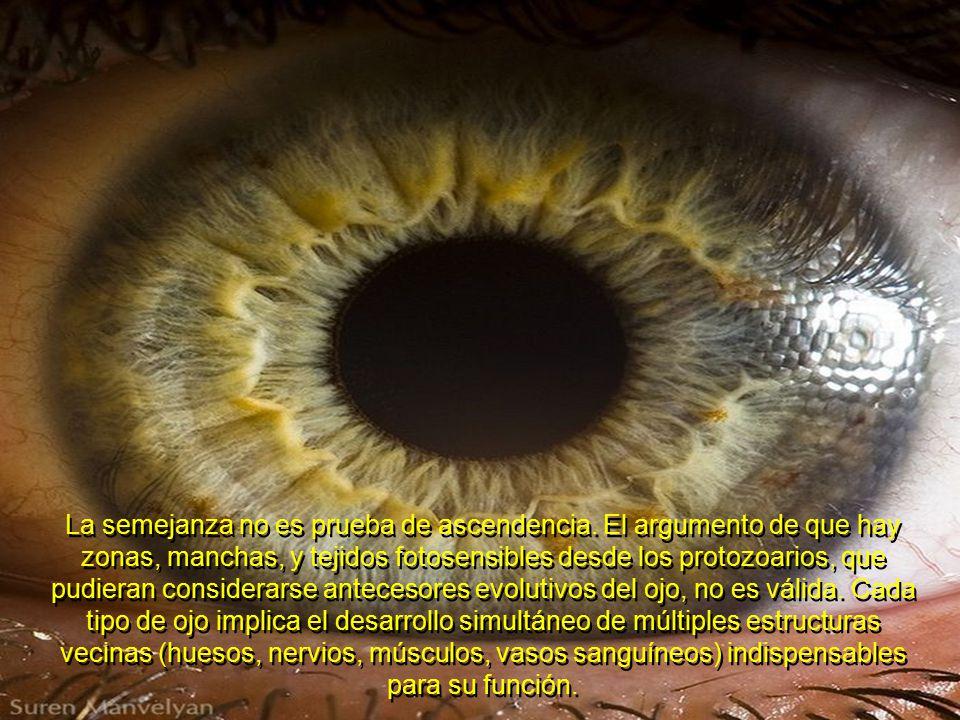 El 96% de los animales, tiene uno de 30 tipos diferentes de ojos; y desde los ojos de los Trilobites encontrados en el Cámbrico (primero y más antiguo estrato con fósiles), hasta los ojos humanos, todos son extraordinariamente complejos.