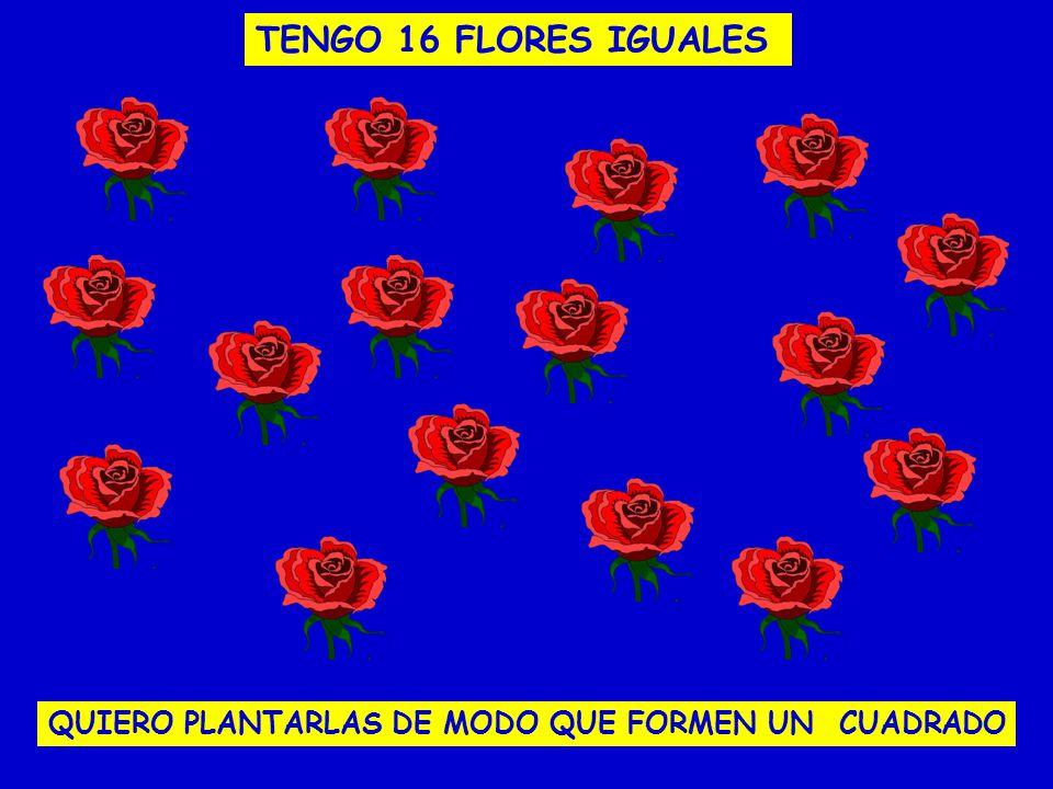 TENGO 16 FLORES IGUALES QUIERO PLANTARLAS DE MODO QUE FORMEN UN CUADRADO
