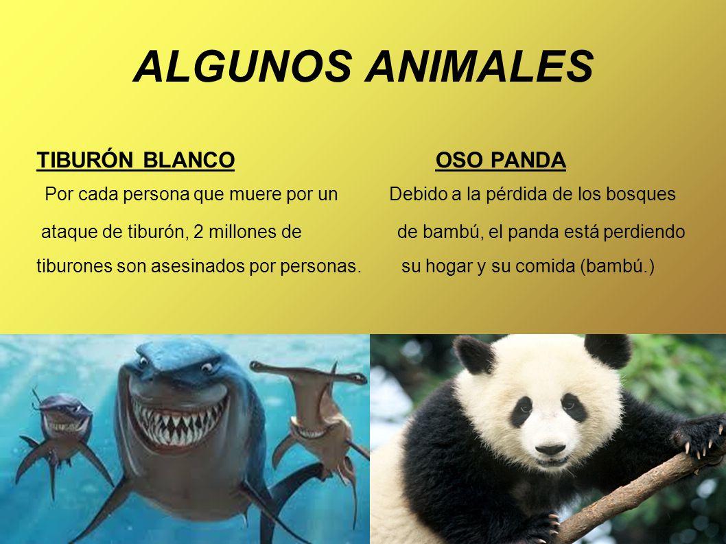 ALGUNOS ANIMALES TIBURÓN BLANCO Por cada persona que muere por un Debido a la pérdida de los bosques ataque de tiburón, 2 millones de de bambú, el panda está perdiendo tiburones son asesinados por personas.