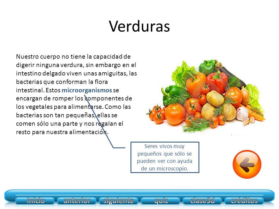 Verduras Nuestro cuerpo no tiene la capacidad de digerir ninguna verdura, sin embargo en el intestino delgado viven unas amiguitas, las bacterias que conforman la flora intestinal.