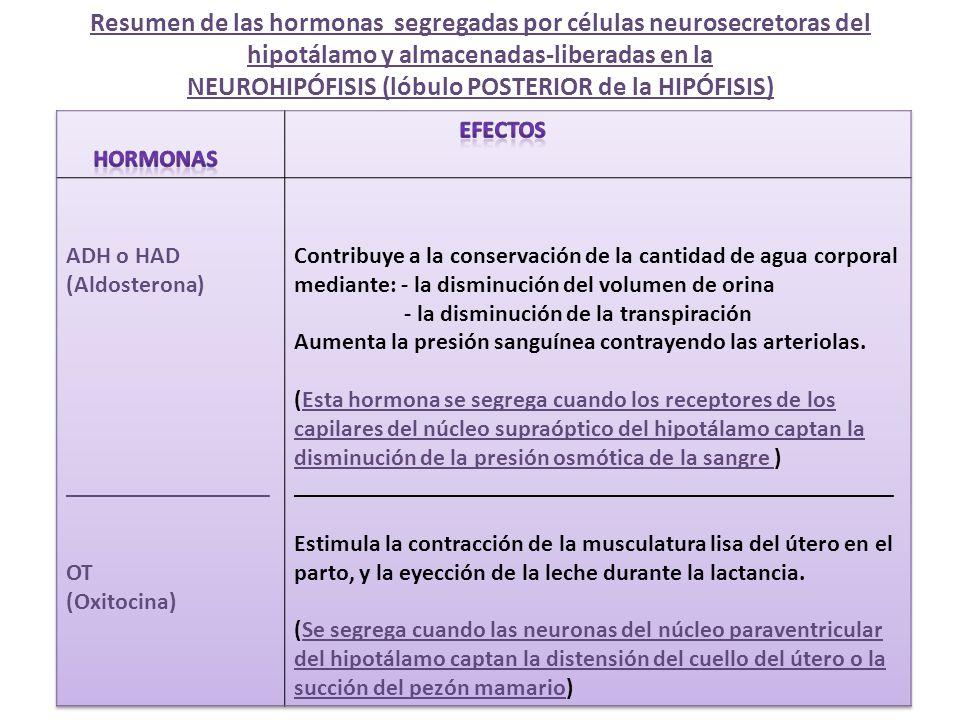 Resumen de las hormonas segregadas por células neurosecretoras del hipotálamo y almacenadas-liberadas en la NEUROHIPÓFISIS (lóbulo POSTERIOR de la HIPÓFISIS)