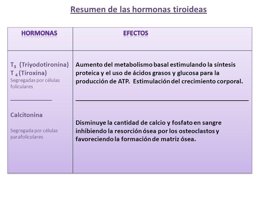 Resumen de las hormonas tiroideas