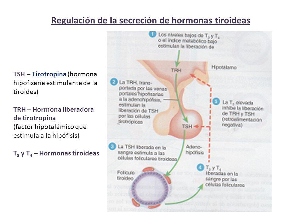 Regulación de la secreción de hormonas tiroideas TSH – Tirotropina (hormona hipofisaria estimulante de la tiroides) TRH – Hormona liberadora de tirotropina (factor hipotalámico que estimula a la hipófisis) T 3 y T 4 – Hormonas tiroideas
