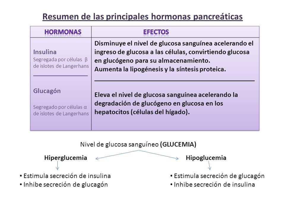 Resumen de las principales hormonas pancreáticas Nivel de glucosa sanguíneo (GLUCEMIA) HiperglucemiaHipoglucemia Estimula secreción de insulina Inhibe secreción de glucagón Estimula secreción de glucagón Inhibe secreción de insulina