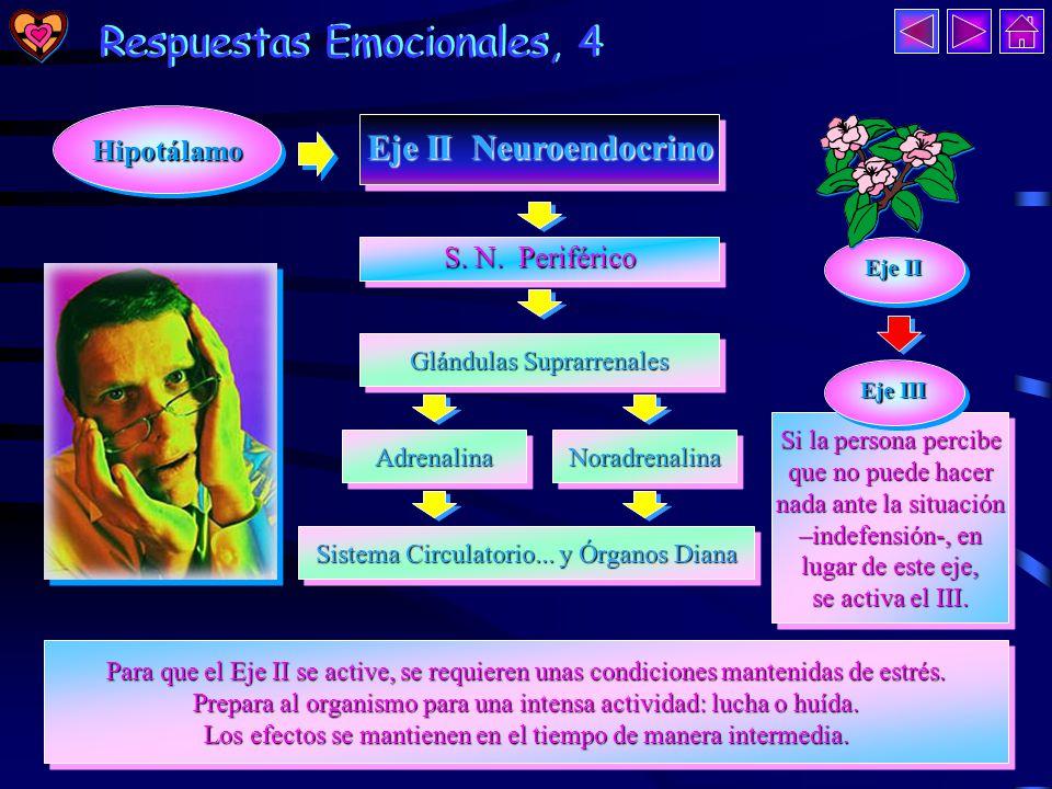 Respuestas Emocionales, 3 Respuestas Emocionales, 3 Hipotálamo Hipotálamo Eje I Neural Eje I Neural Eje I Neural Eje I Neural S.