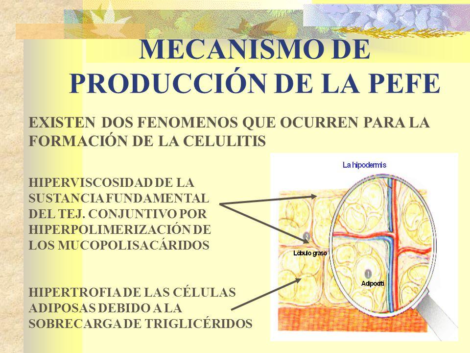MECANISMO DE PRODUCCIÓN DE LA PEFE EXISTEN DOS FENOMENOS QUE OCURREN PARA LA FORMACIÓN DE LA CELULITIS HIPERVISCOSIDAD DE LA SUSTANCIA FUNDAMENTAL DEL TEJ.