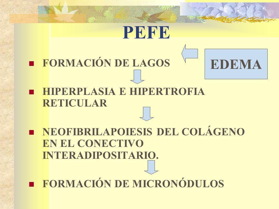 PEFE FORMACIÓN DE LAGOS HIPERPLASIA E HIPERTROFIA RETICULAR NEOFIBRILAPOIESIS DEL COLÁGENO EN EL CONECTIVO INTERADIPOSITARIO.