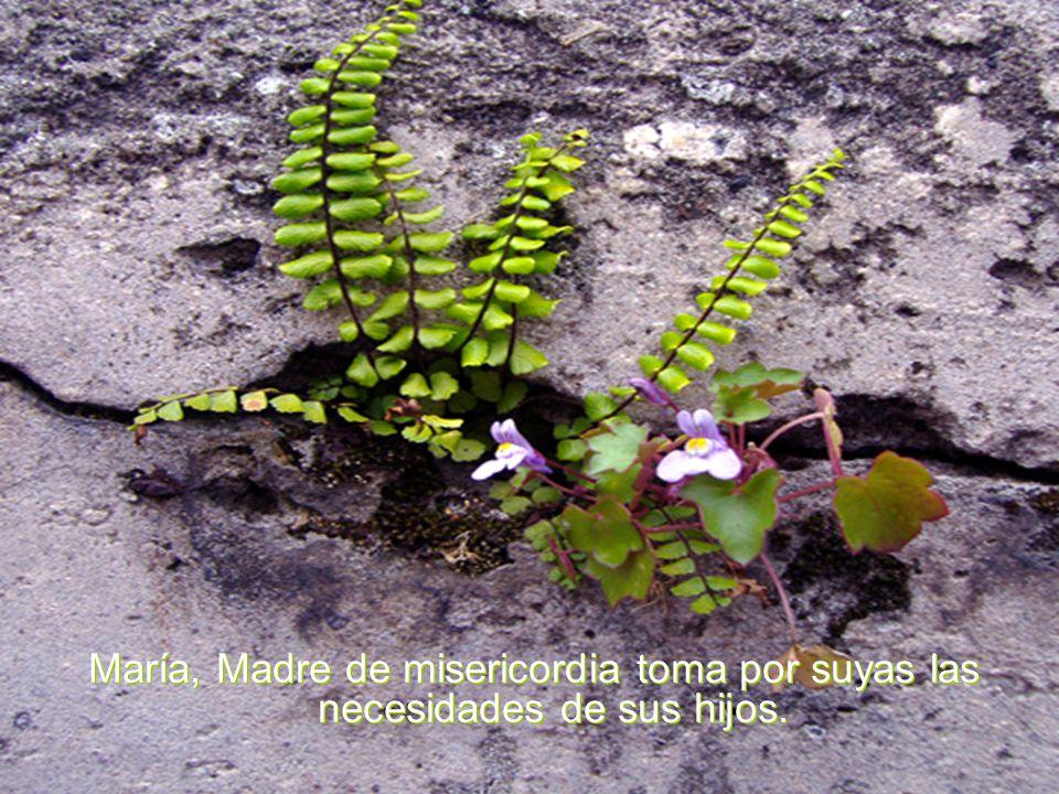 María nuestra bella y hábil jardinera a tu cuidado, habilidad y buen gusto fiamos el cultivo de nuestro jardín