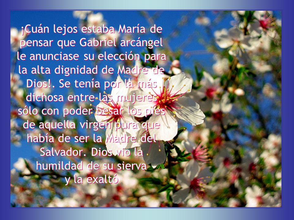 Al amor de María debe el mundo su salvación.