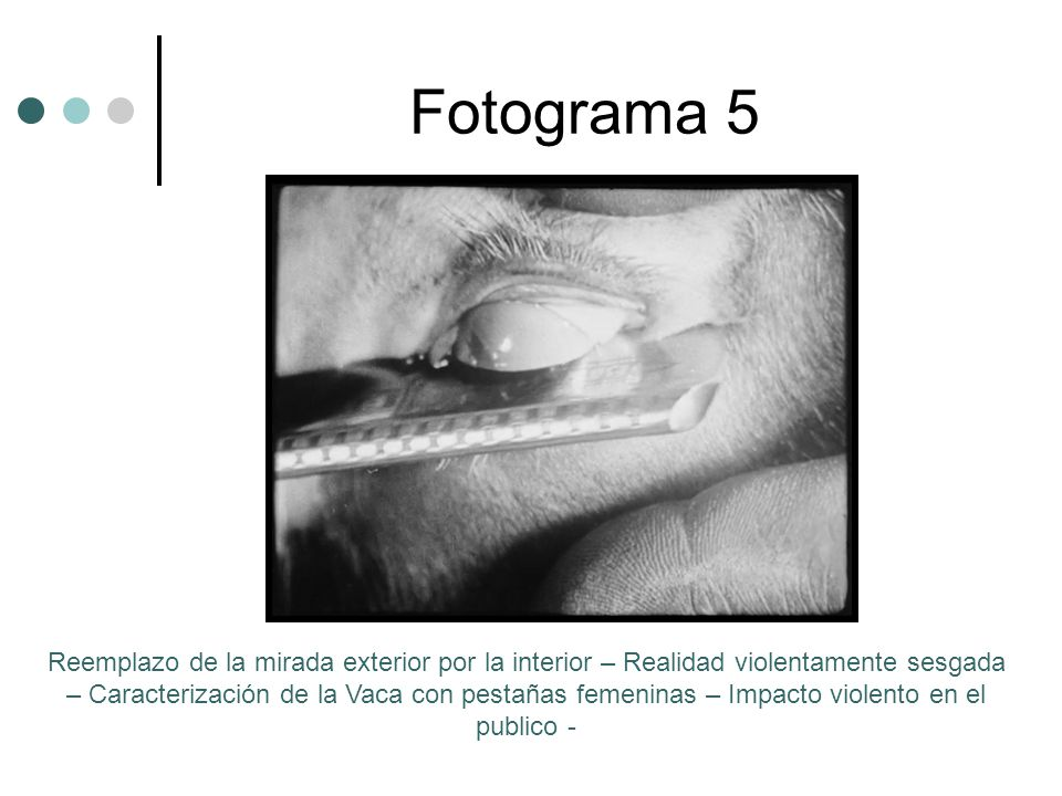 Fotograma 5 Reemplazo de la mirada exterior por la interior – Realidad violentamente sesgada – Caracterización de la Vaca con pestañas femeninas – Impacto violento en el publico -