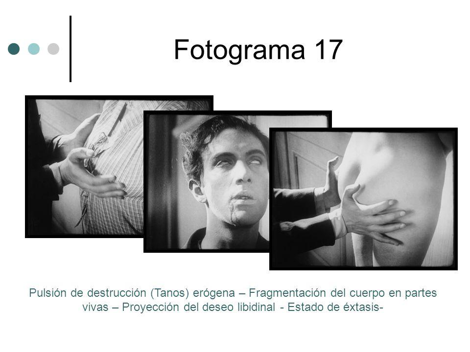 Fotograma 17 Pulsión de destrucción (Tanos) erógena – Fragmentación del cuerpo en partes vivas – Proyección del deseo libidinal - Estado de éxtasis-