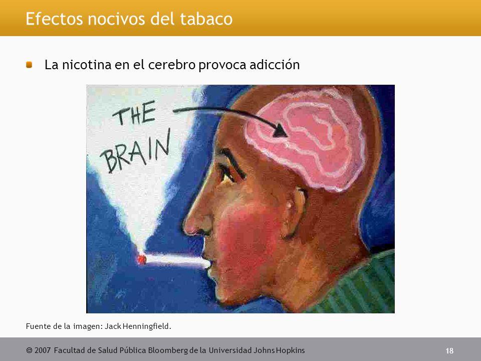  2007 Facultad de Salud Pública Bloomberg de la Universidad Johns Hopkins 18 Efectos nocivos del tabaco La nicotina en el cerebro provoca adicción Fuente de la imagen: Jack Henningfield.