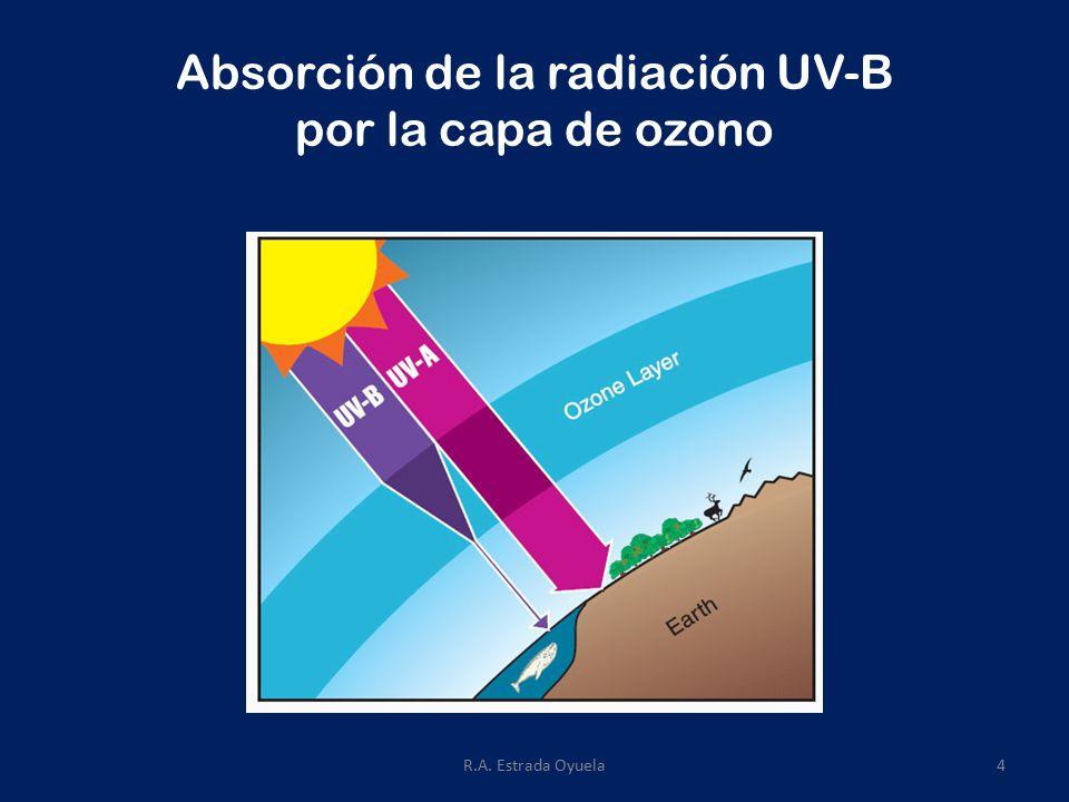 R.A. Estrada Oyuela4 Absorción de la radiación UV-B por la capa de ozono