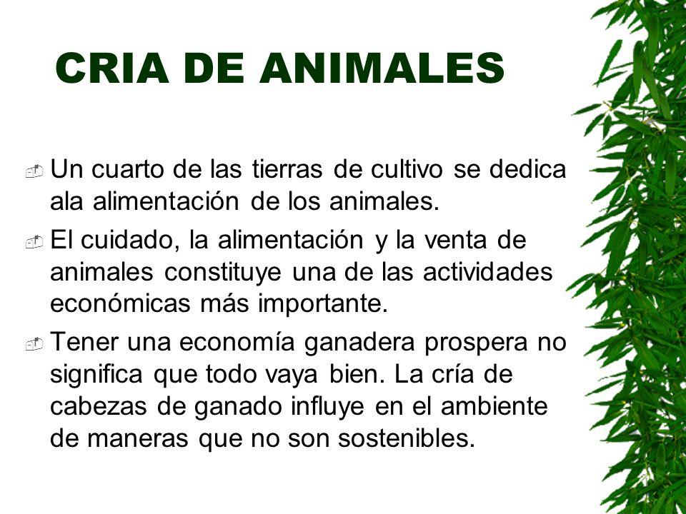 CRIA DE ANIMALES  Un cuarto de las tierras de cultivo se dedica ala alimentación de los animales.