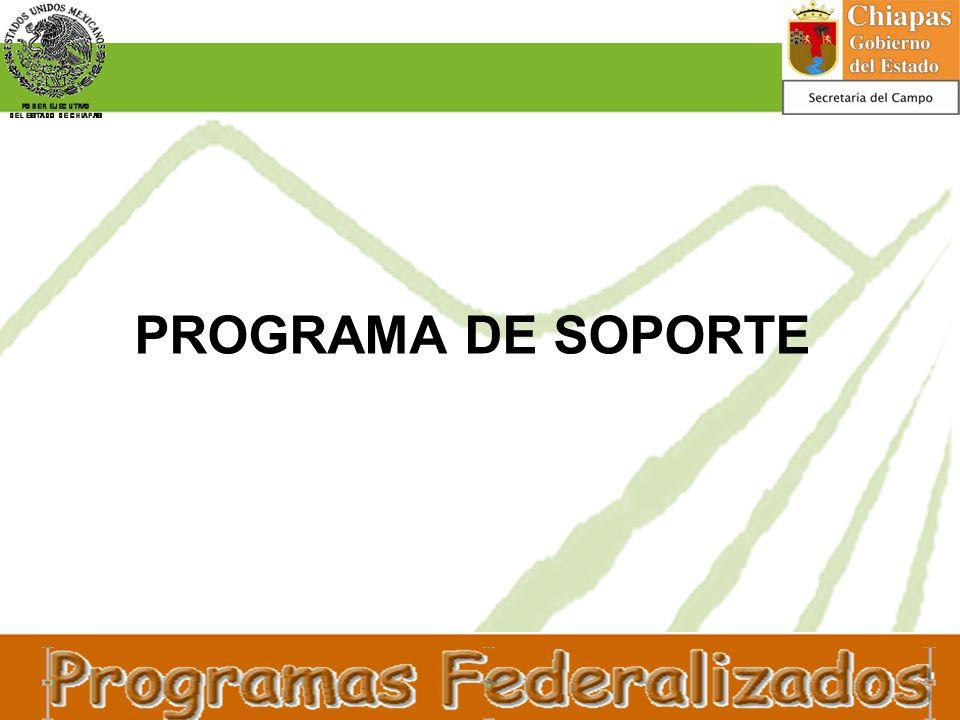 PROGRAMA DE SOPORTE