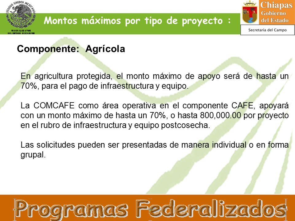 En agricultura protegida, el monto máximo de apoyo será de hasta un 70%, para el pago de infraestructura y equipo.