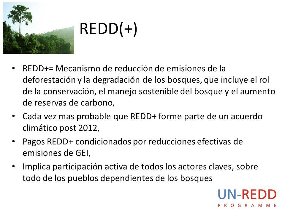 REDD+= Mecanismo de reducción de emisiones de la deforestación y la degradación de los bosques, que incluye el rol de la conservación, el manejo sostenible del bosque y el aumento de reservas de carbono, Cada vez mas probable que REDD+ forme parte de un acuerdo climático post 2012, Pagos REDD+ condicionados por reducciones efectivas de emisiones de GEI, Implica participación activa de todos los actores claves, sobre todo de los pueblos dependientes de los bosques REDD(+)