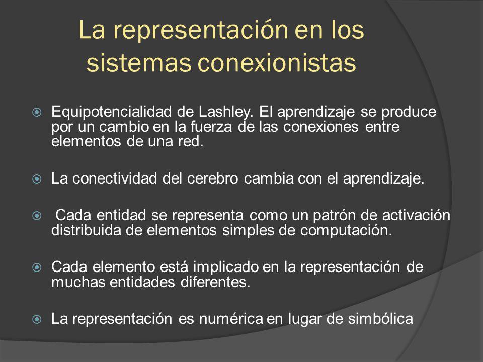 La representación en los sistemas conexionistas  Equipotencialidad de Lashley.
