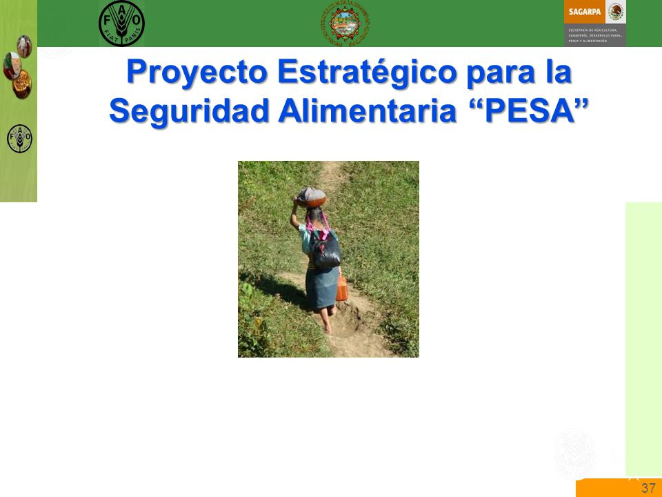 37 The State of Food Insecurity in the World Food and Agriculture Organization of the United Nations The State of Food Insecurity in the World Proyecto Estratégico para la Seguridad Alimentaria PESA